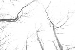 Overexposed bare trees