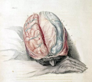 brain - brain_blogger - Flickr