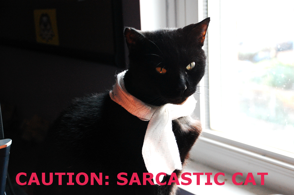 Black cat wearing a scarf and sitting near a window