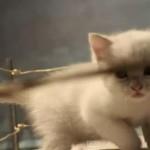 white kitten close up