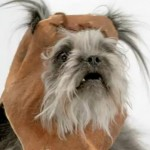 Furry terrier dog in Ewok headpiece
