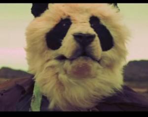 close up of a panda bear face