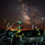 Shot of South Dakota night sky with yellow flowers in foreground