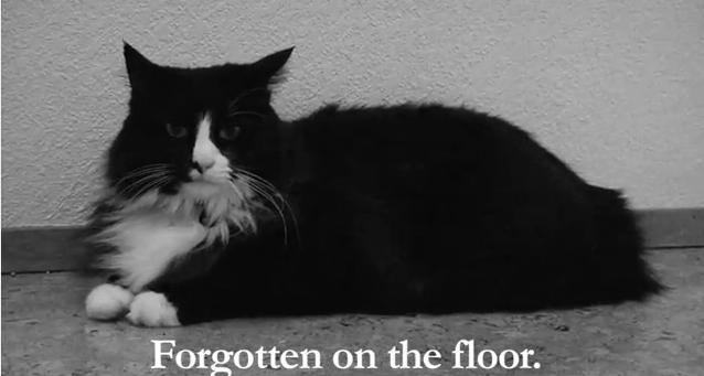 black and white photo of a black and white cat lying on floor