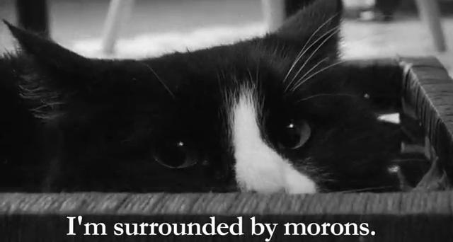 black and white photo of the eyes of a black and white cat