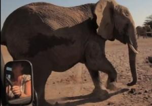 Upset mother elephant