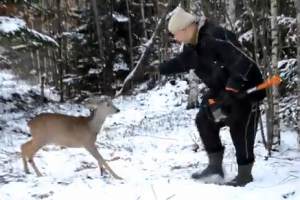 Deer attacks man