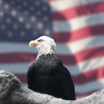Eagle in front of American glag