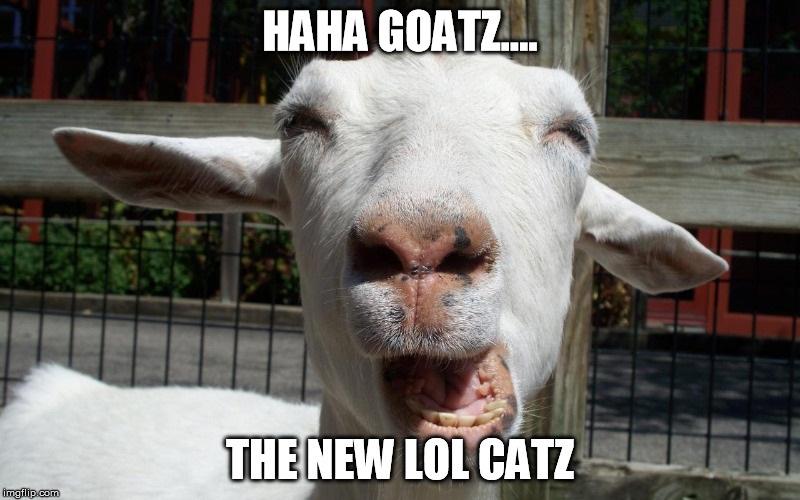 HAHA GOATZ THE NEW LOL CATZ
