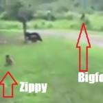 Zippy and Bigfoot
