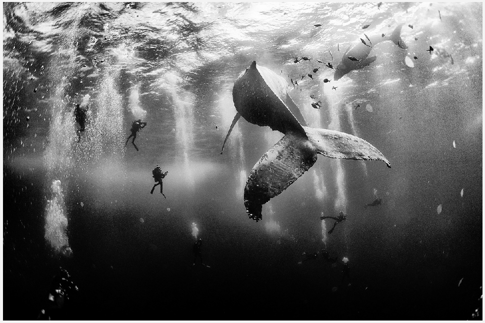 Annuar Patjane photos - winning photo whales with divers