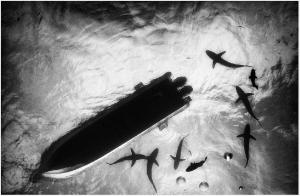 Anuar Patjane photos - boat with sharks