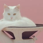 Kitty cats team up in the minimalsitic music video