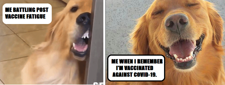 Meme dog on left has fatigue after vaccine dog on right is elated to have had the vaccine